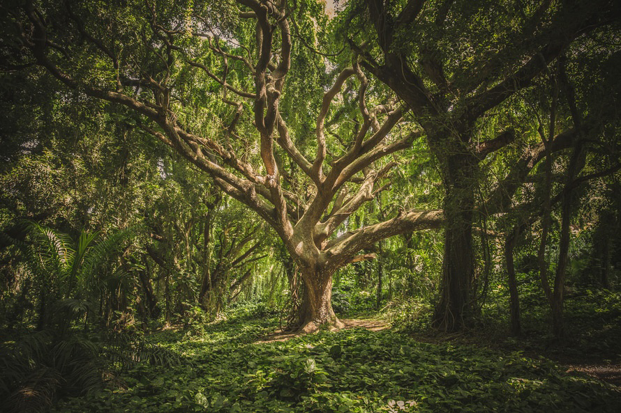 The tree of life - Natures Rooted Wisdom